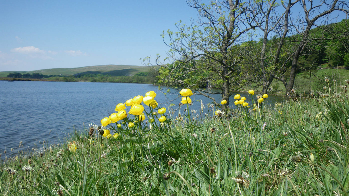 Summer flowers at Malham Tarn