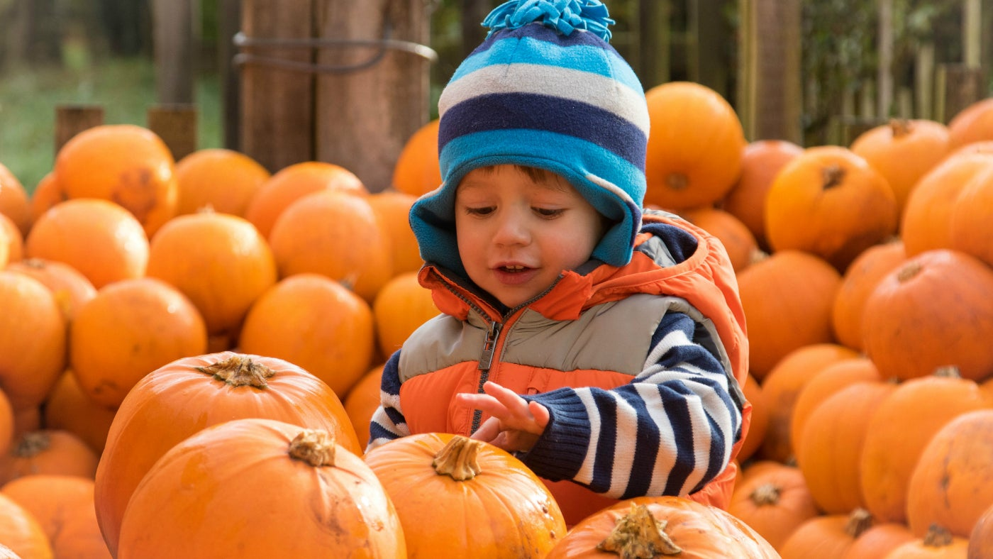 Child with pumpkins in autumn at Charlecote Park