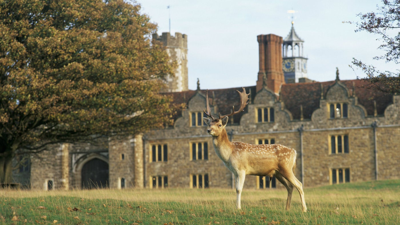 Image result for knole