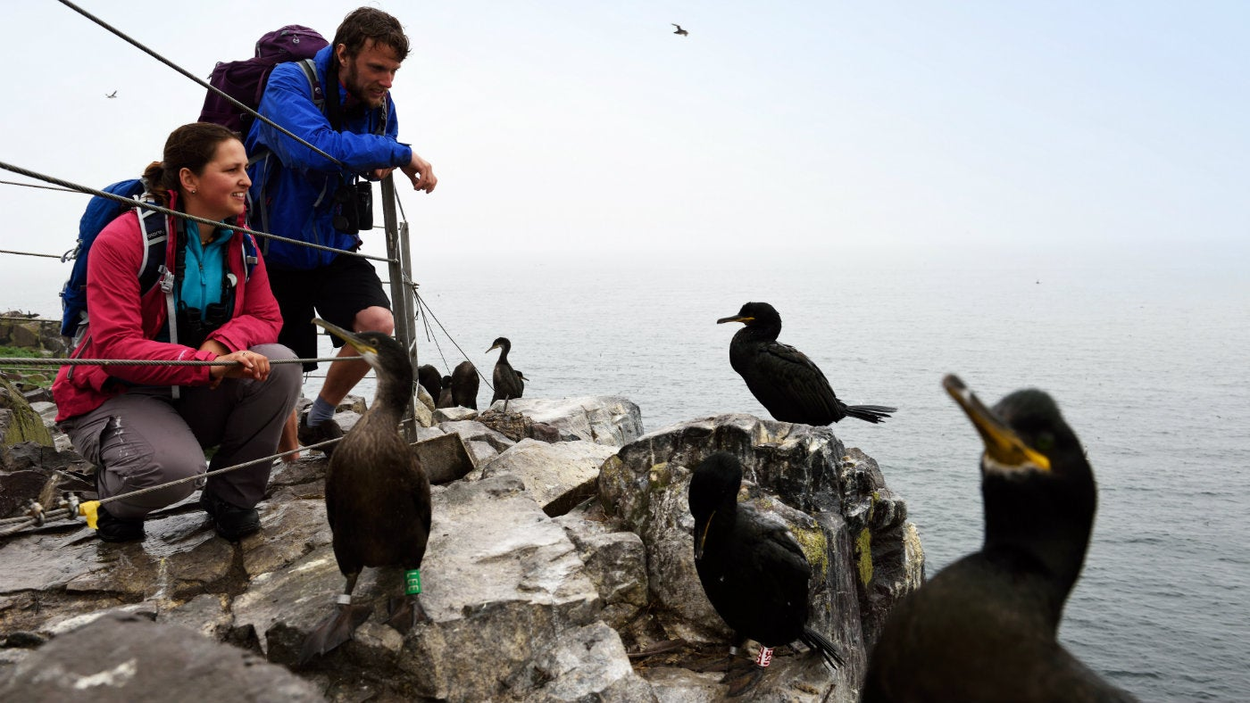 Visitors looking at shags close up on the Farne Islands rocks