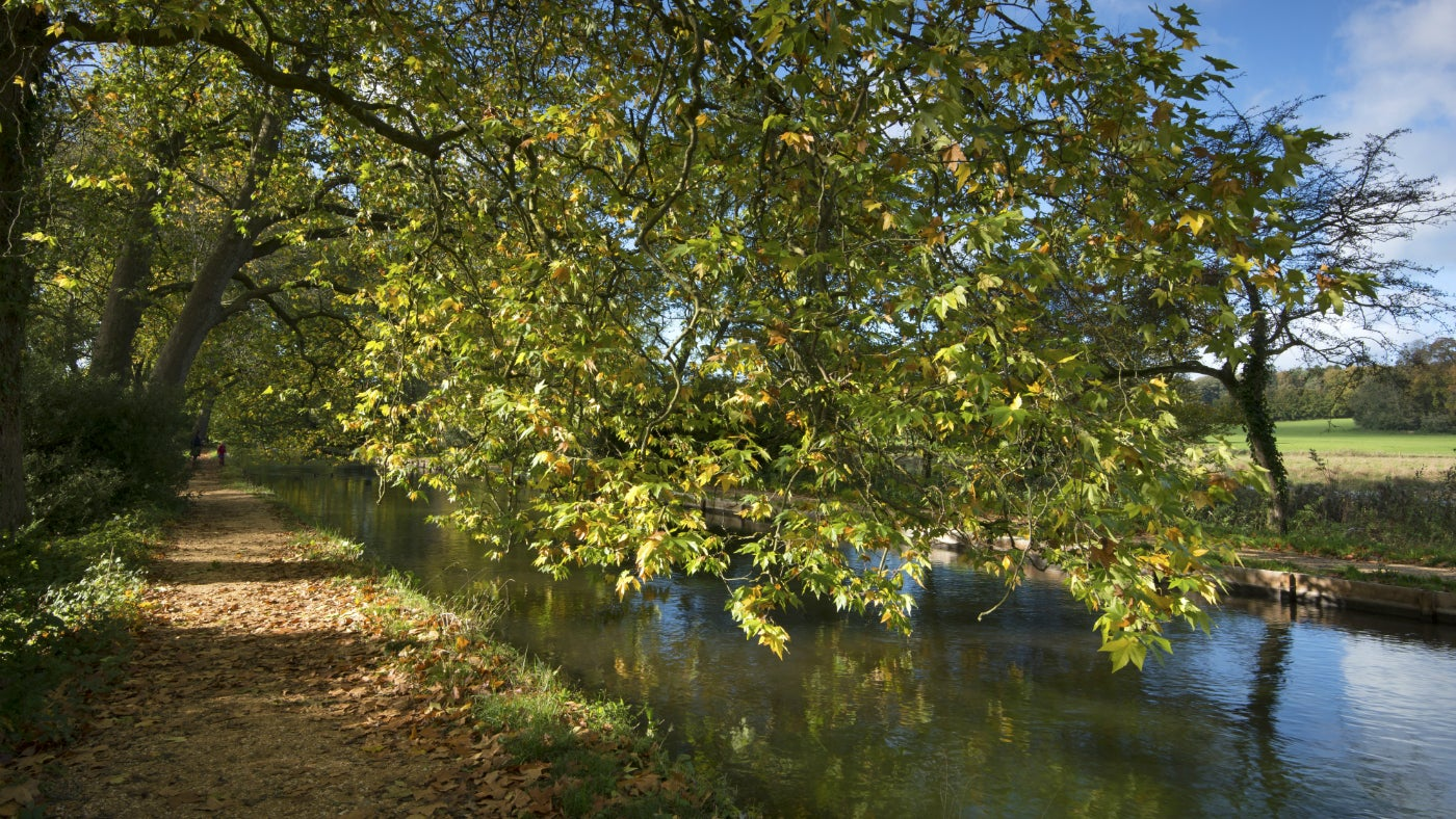 A path by the river at Mottisfont, Hampshire in autumn