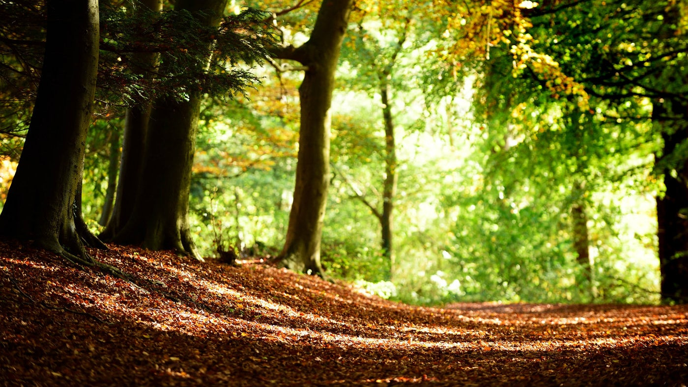 Autumn woodland at Chartwell, a National Trust property in Kent