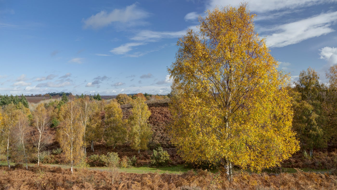 New Forest heathland landscape in autumn