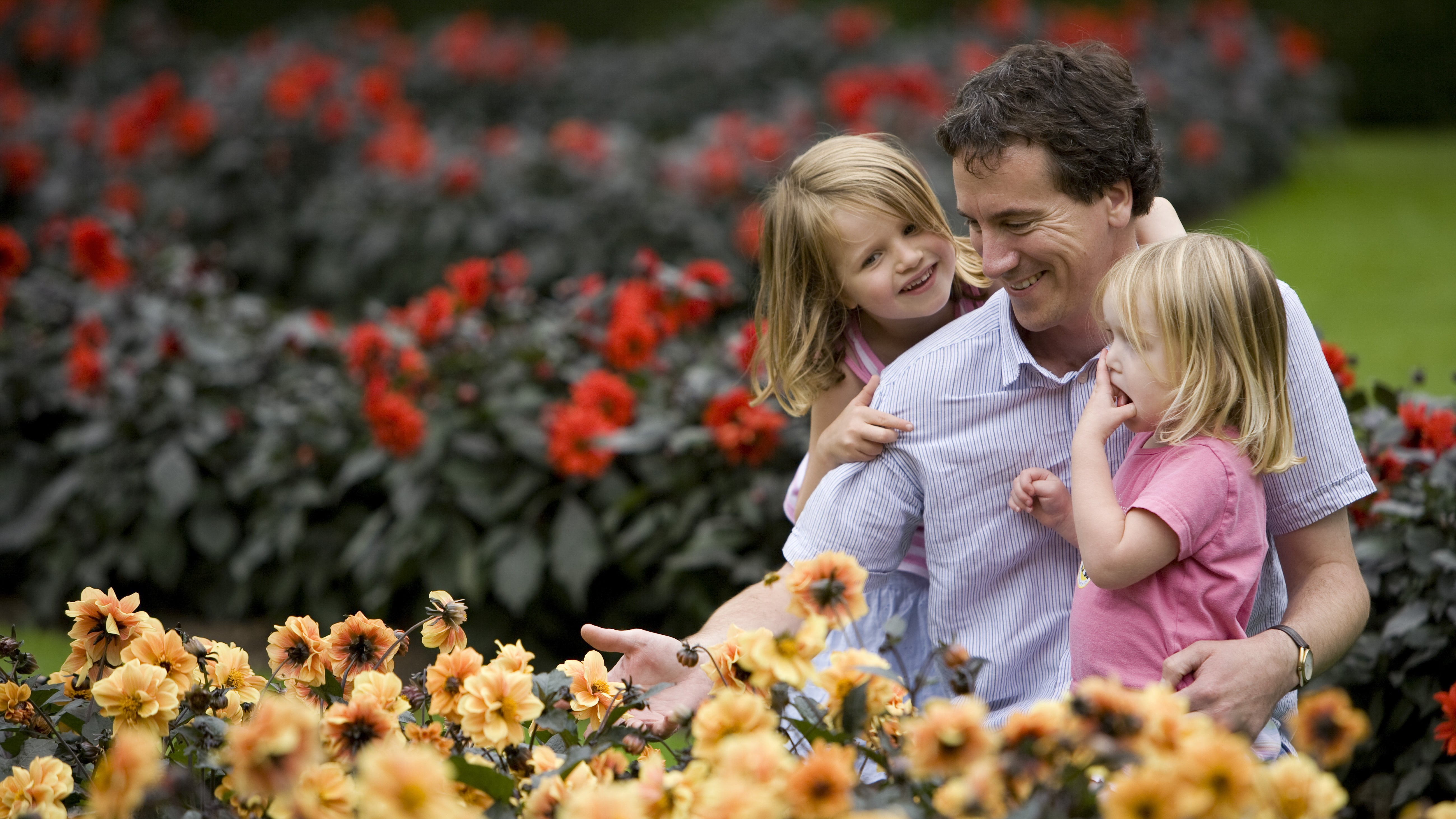 Father and children in the dahlia garden