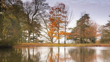View of autumnal trees reflected in the lake at Petworth