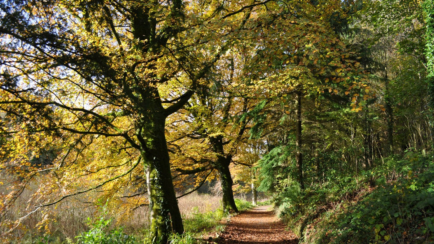 Stackpole's woodland footpath in autumn