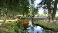 New Forest ponies drink at Dockens Water in the New Forest, Hampshire