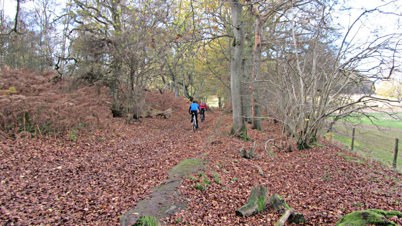 Abinger Roughs autumn cycling
