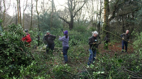 A team of volunteers help with coppicing