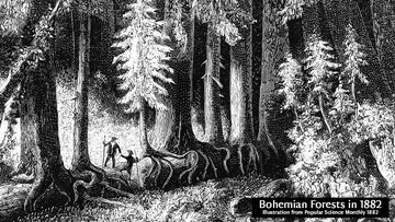 Illustration of the Bohemian forest