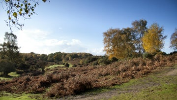 Autumn trees against a bright blue sky at Rockford Common in the New Forest, Hampshire