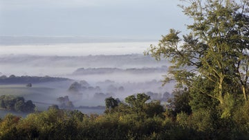 Mists over Scearn Bank Limpsfield Common