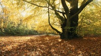 Autumn on Limpsfield Common Surrey