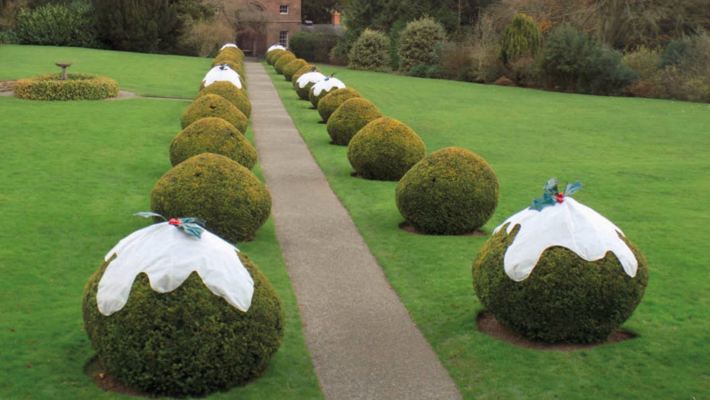 Berrington's entrance pathway hedges decorated as Christmas puddings