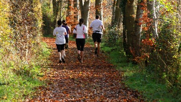parkrun at Killerton in autumn and winter