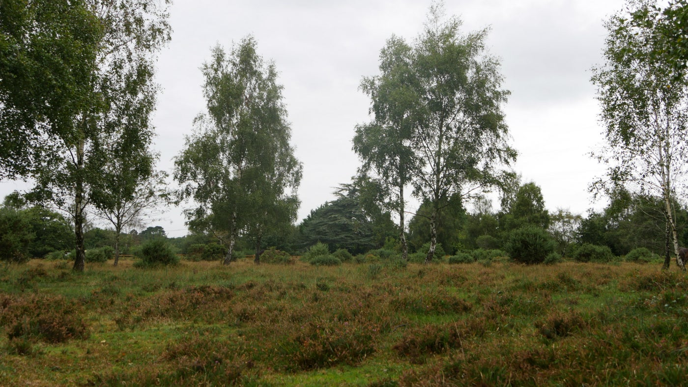 Heathland with trees on the horizon at Hightown Common in the New Forest, Hampshire