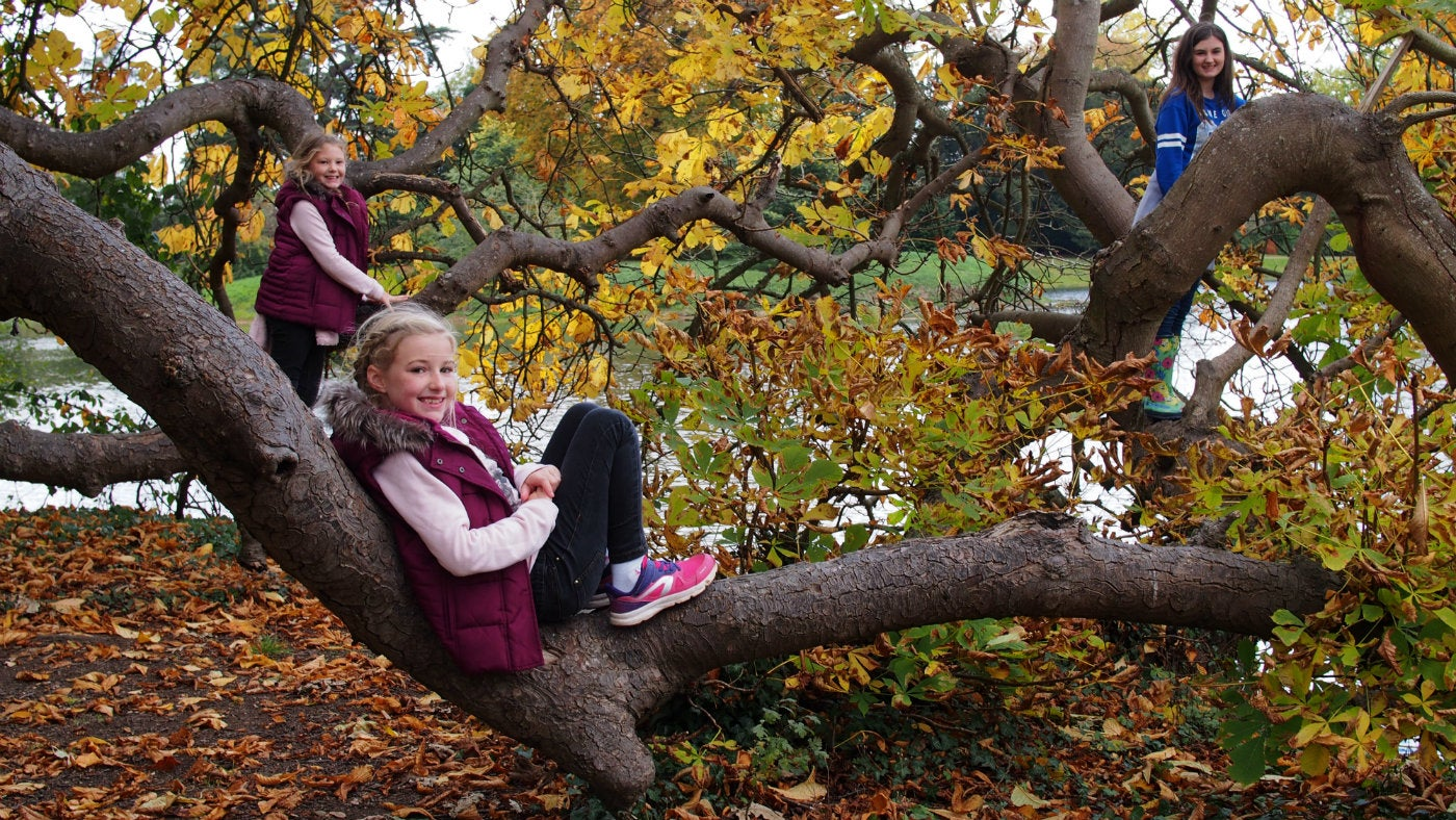 Croome autumn children in tree