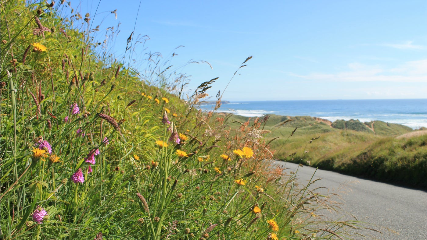 Wildflowers overlooking Freshwater West