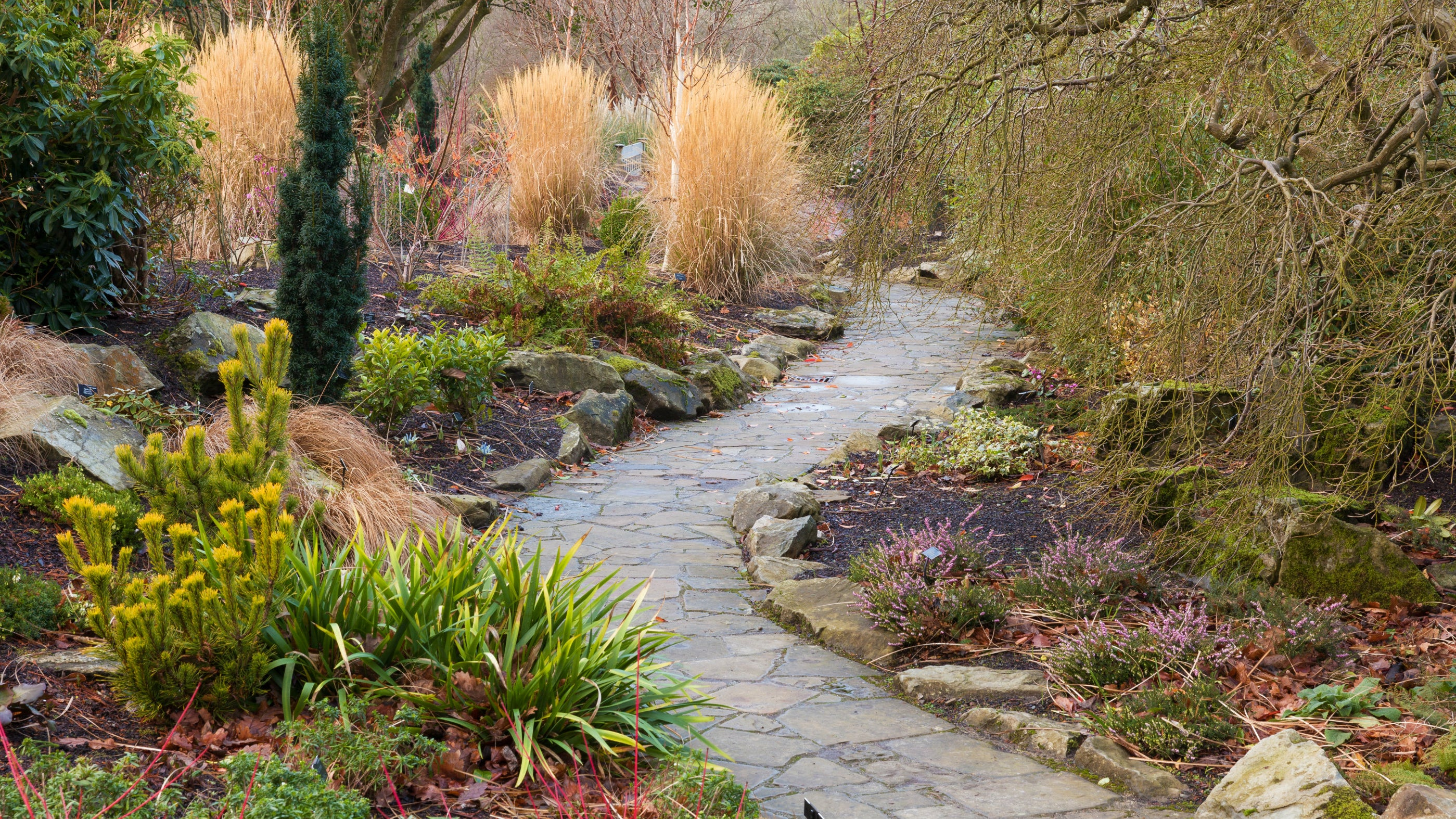 A path winds through colourful trees, shrubs and grasses in the Winter Garden at Bodnant