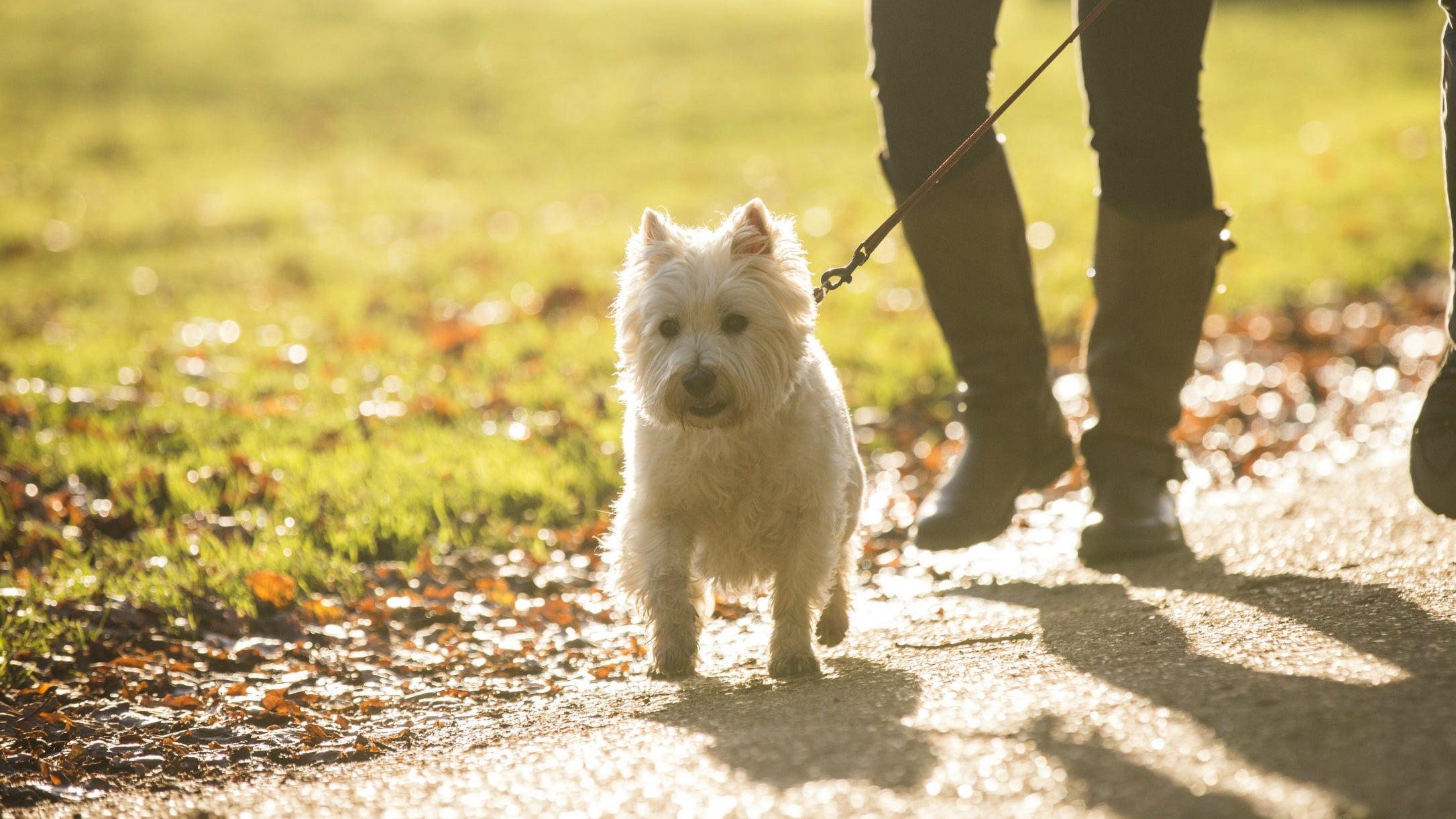 Visitors dog-walking at Ickworth, Suffolk