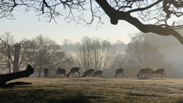 Knole Park in Kent is beautiful at this time of year.