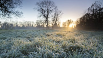 A crisp winter morning with frost on the grass at Morden Hall Park, London