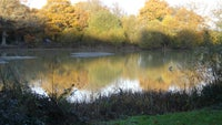 Fourwents Pond at Holmwood Common Surrey