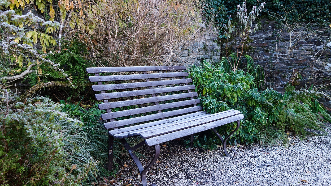 A frosty bench in the Terraces garden at Cotehele, Cornwall