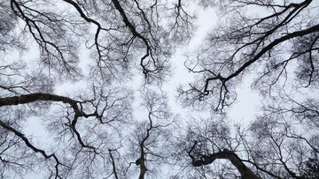 Looking skyward through bare branches