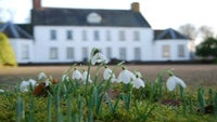 Enjoy the display of snowdrops every weekend in Feb at Springhill