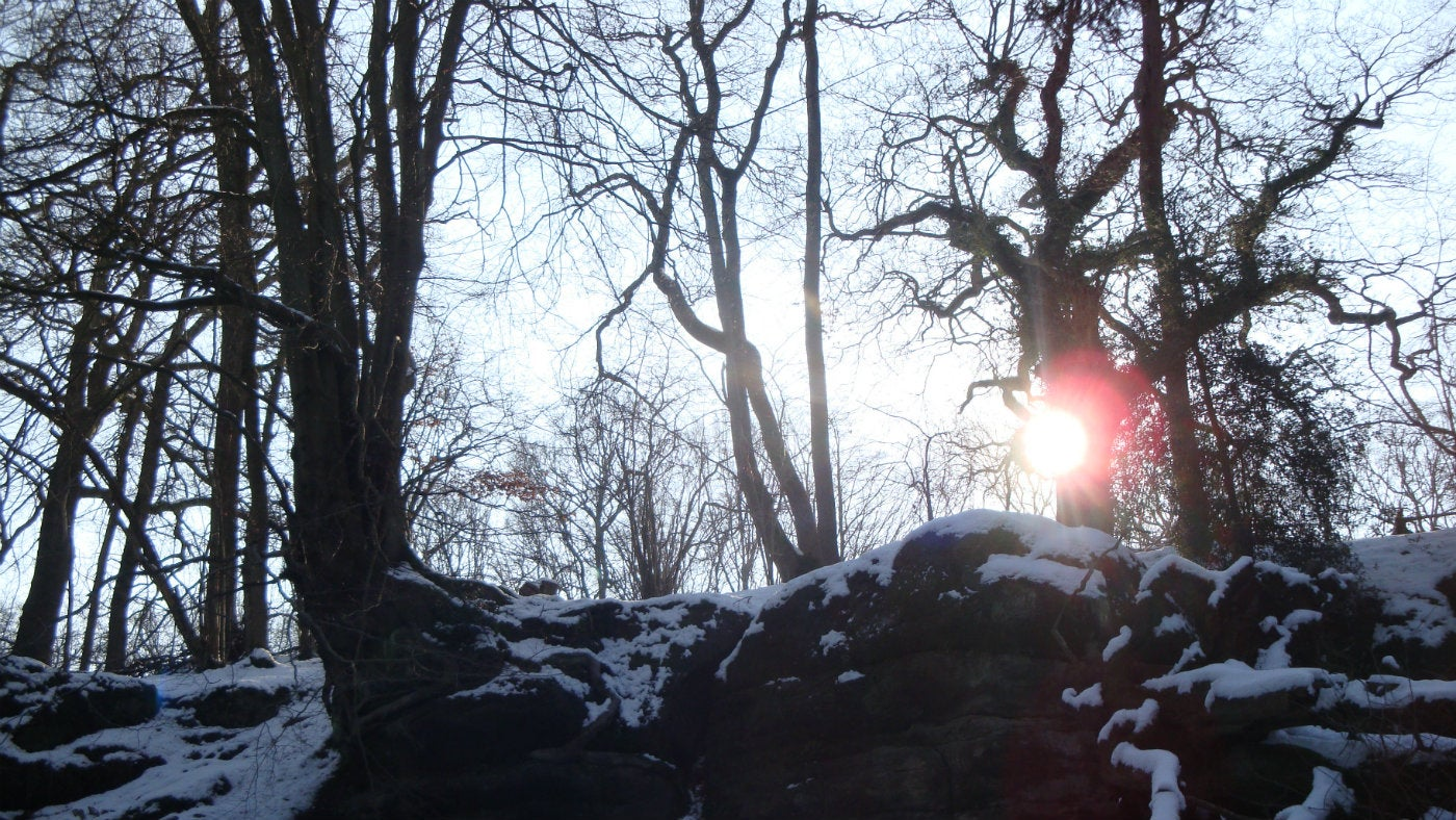 Sun on a woodland path in winter