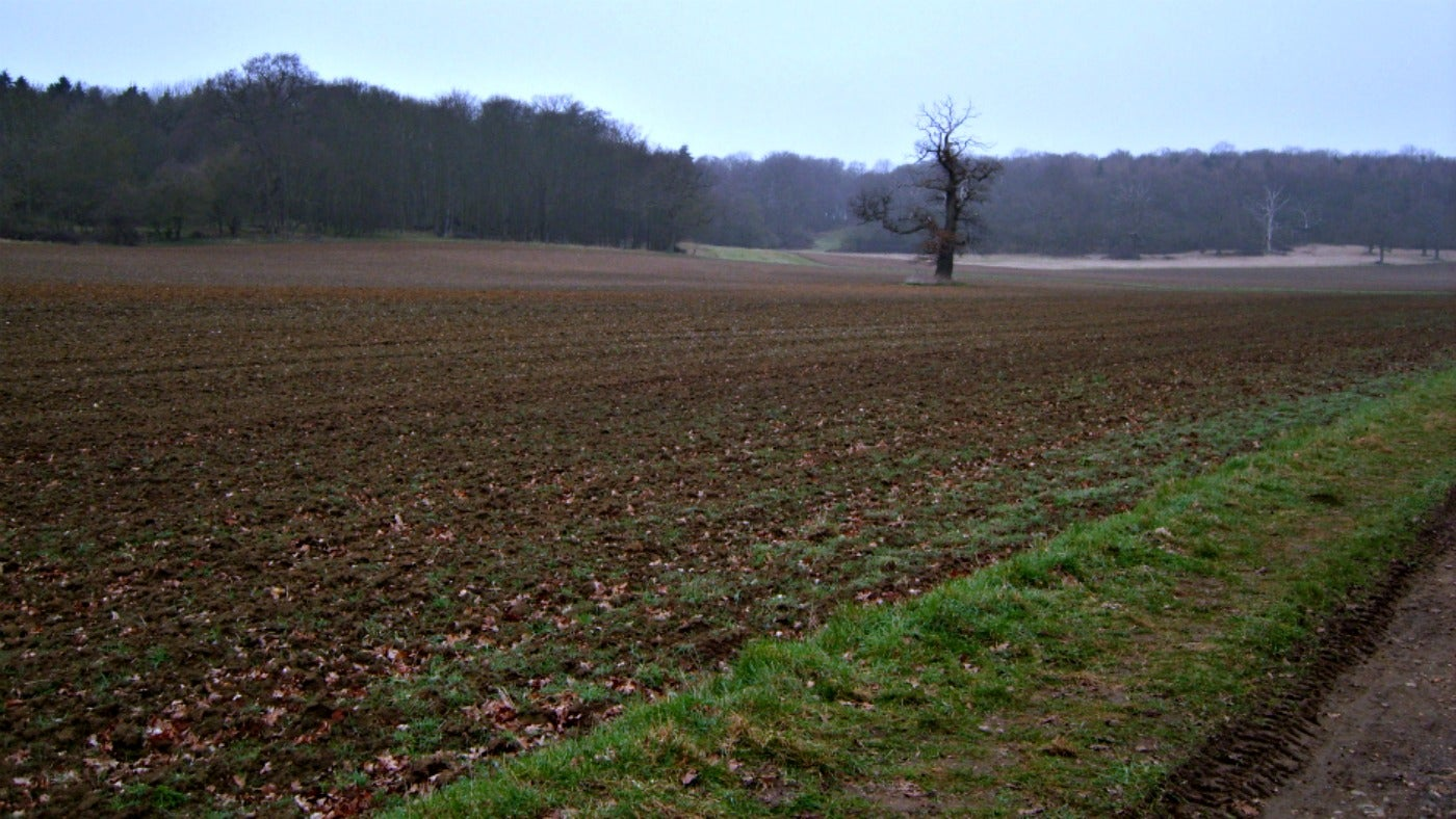 Dig for Victory land on the Ickworth Estate