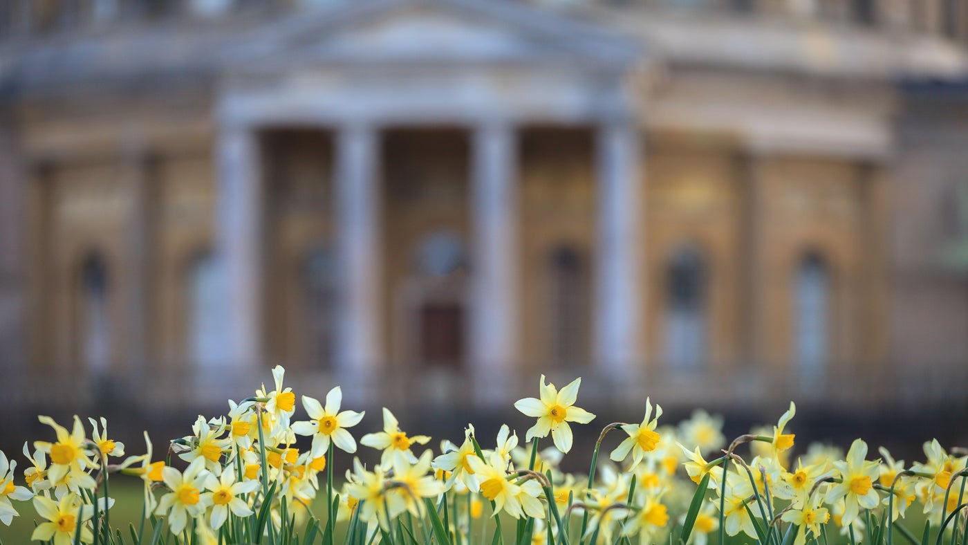 Daffodils in front of Ickworth Rotunda