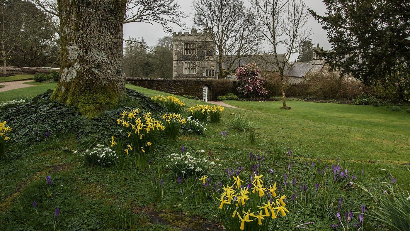 The Upper Garden with daffodils, snow drops, crocuses and the house behind at Cotehele, Cornwall