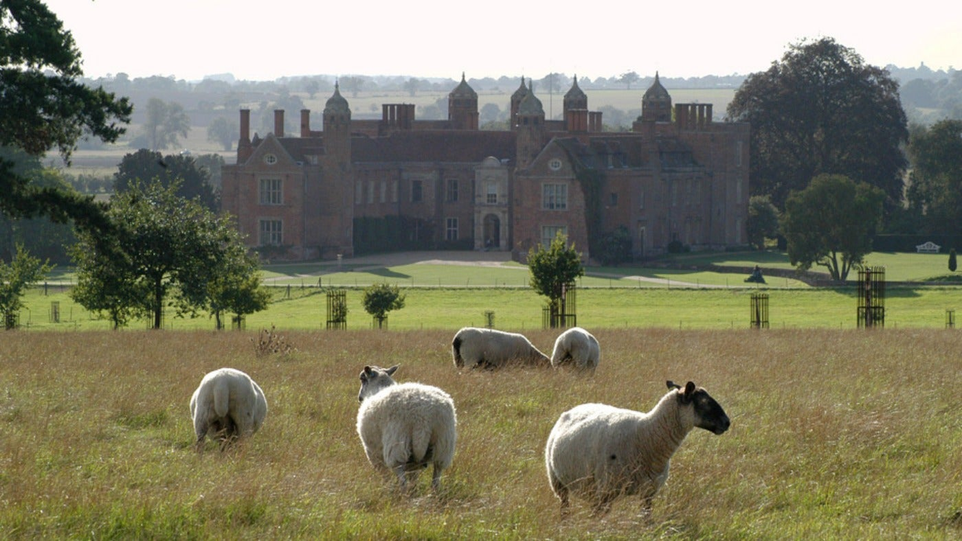 Sheep in foreground with Melford Hall in background
