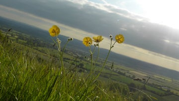 Spring flowers and a county view