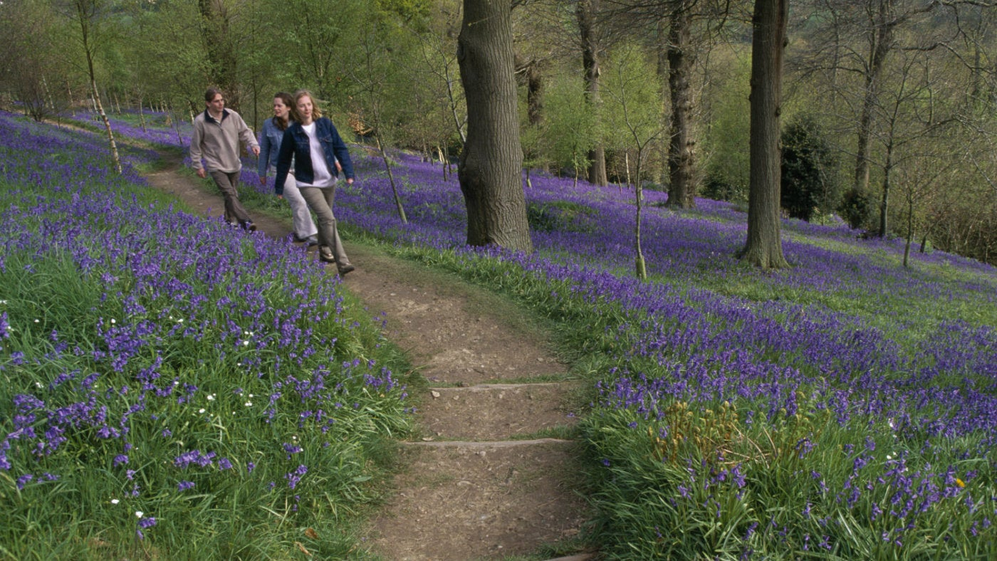 A family walking amongst the bluebells at Emmetts Garden, a National Trust property in Kent