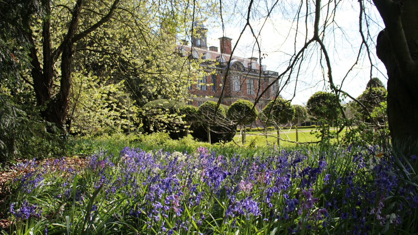 bluebells with the hall in the background