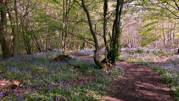 A shot of Blakes Wood in spring