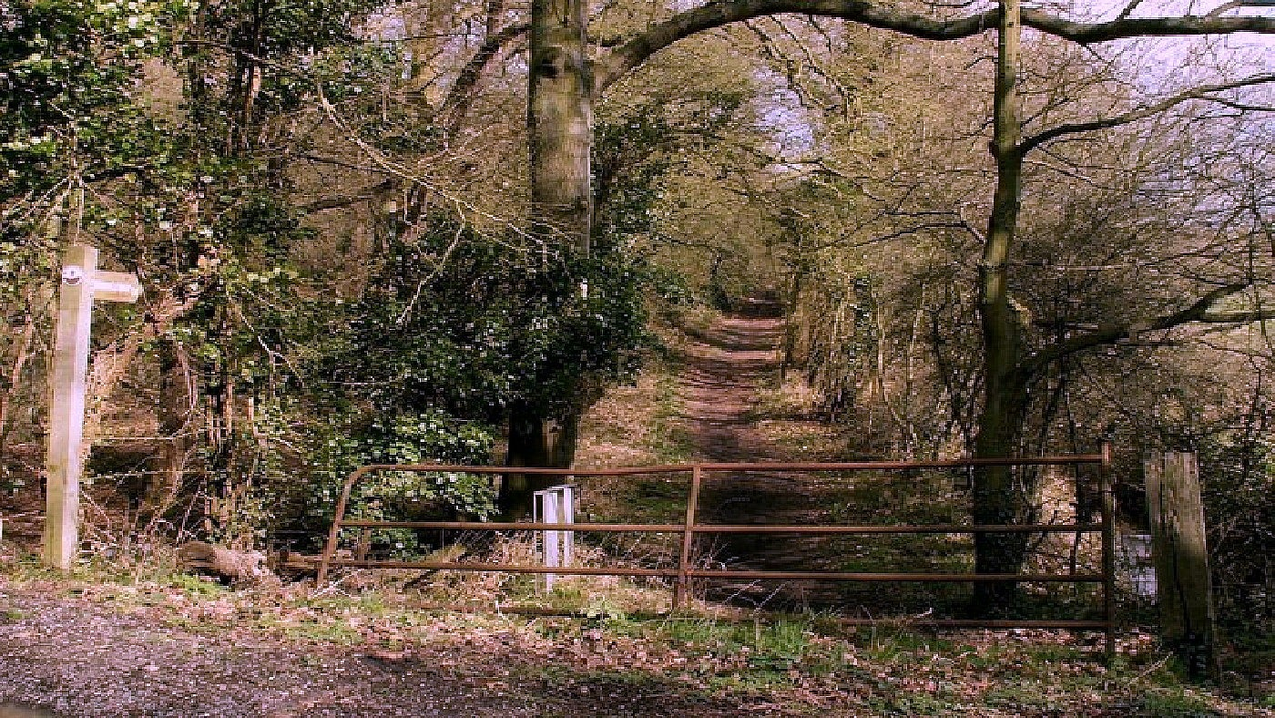 A bridleway leading to Lingwood Common