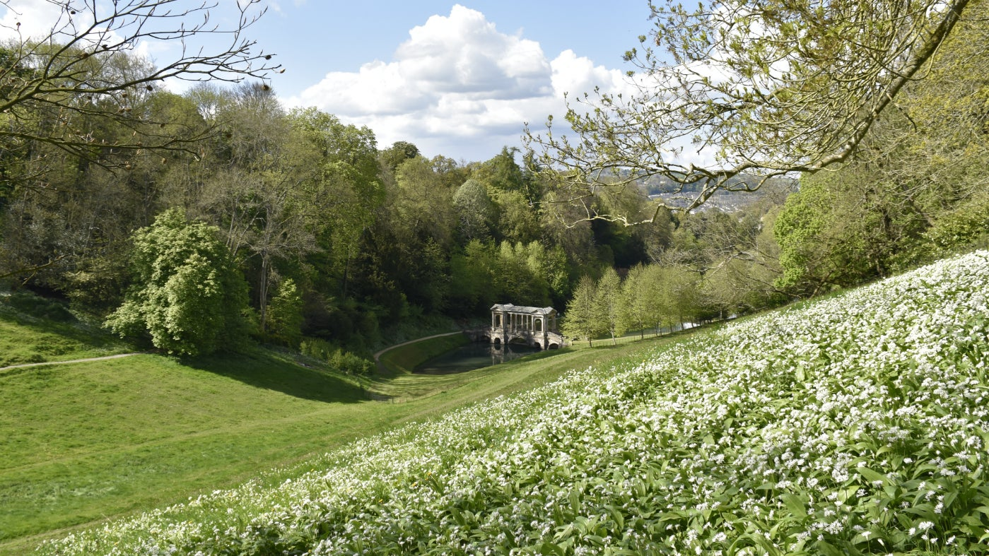 Prior Park in spring comes with the scent of wild garlic