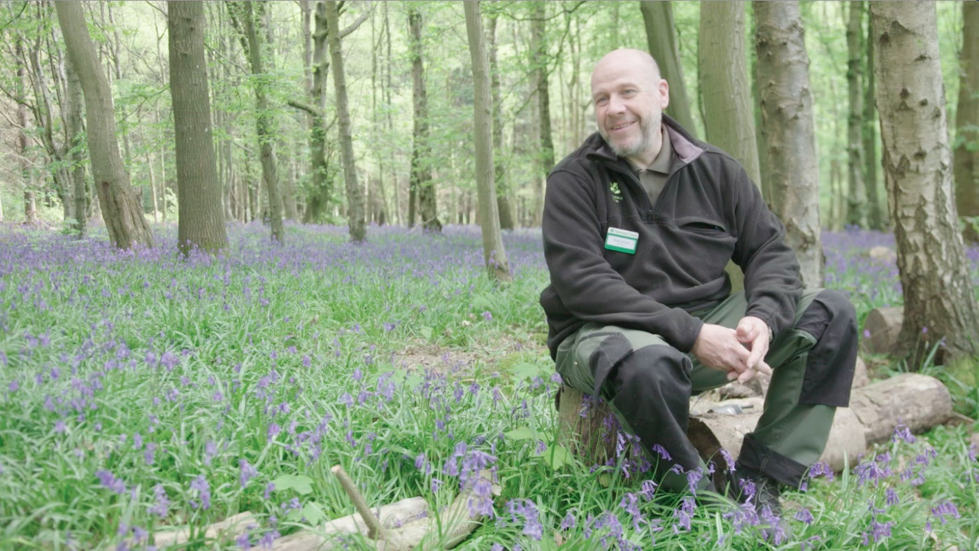 Andy Jesson, Park and Garden Manager, among the bluebells at Walk Wood in Sheffield Park