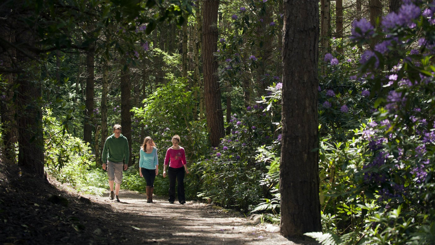 Visitors walking through the woods