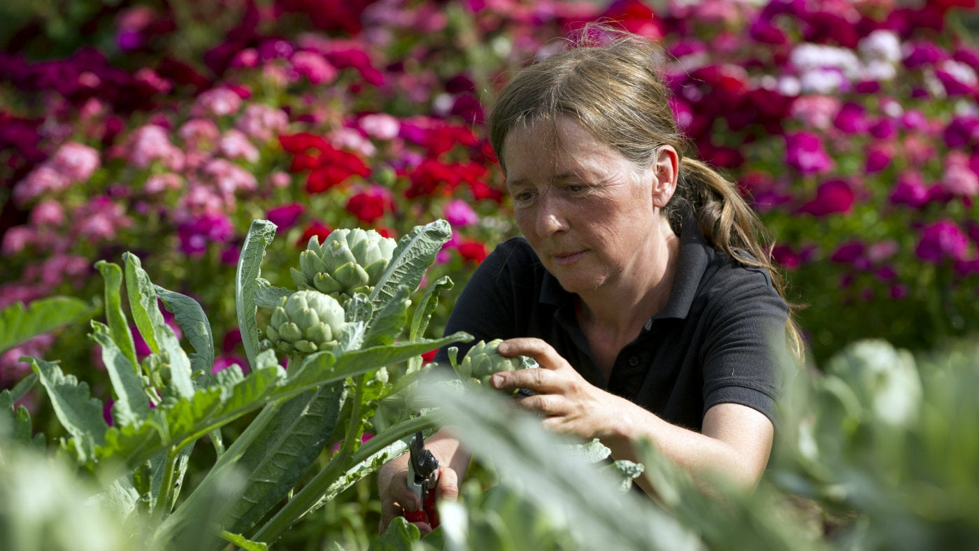 Our walled garden supervisor, Ceridwen, working in the gardens