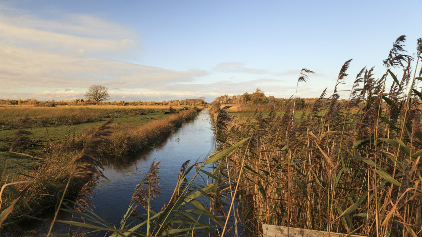 Picture looking down Drainers Dyke between Sedge & Verral's Fen