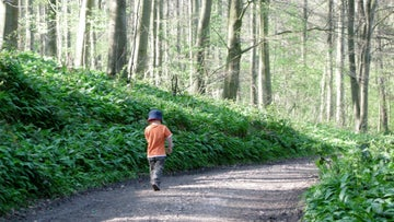 Woodland walks at Wenlock