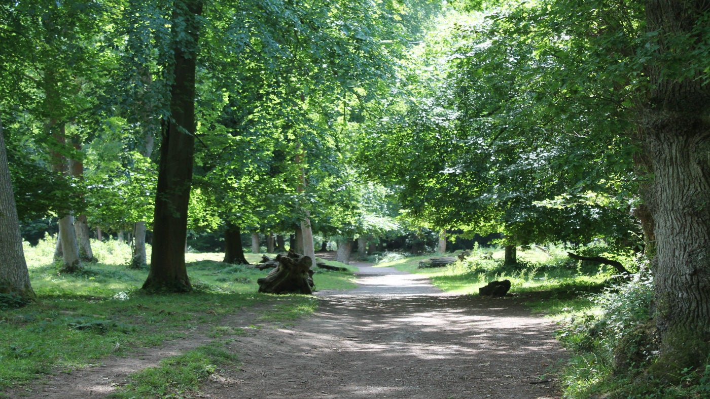 A Path through trees in Leigh Woods