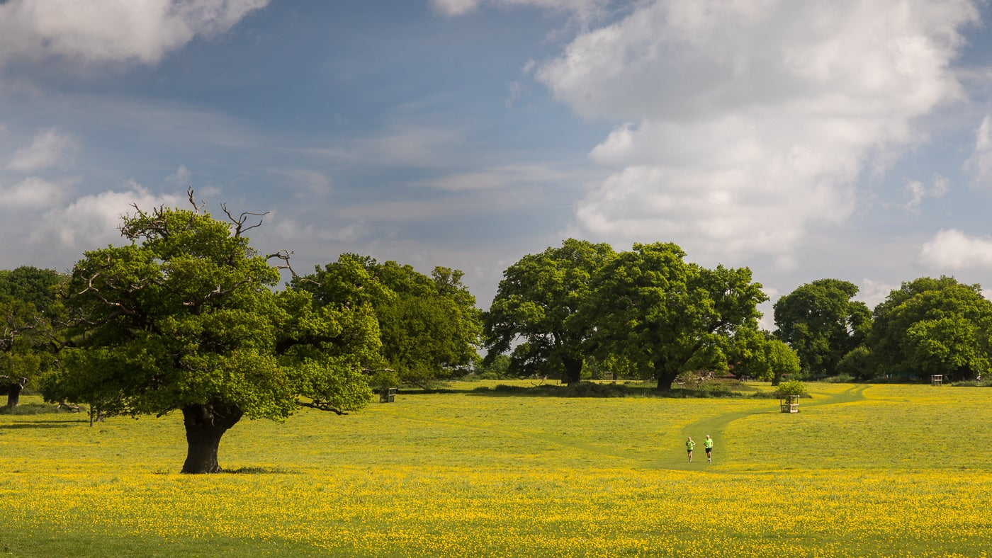 Runners on Takeley Hill covered in buttercups