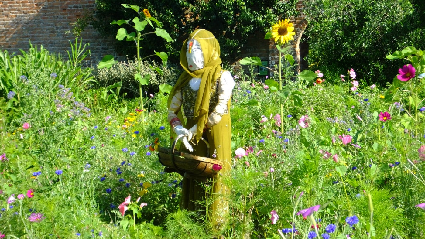 Female scarecrow representing India in a flower bed of the walled kitchen garden, Trengwaninton