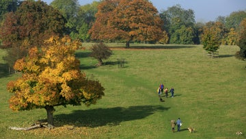 People walking through the Pheasant Park at Basildon Park with the trees showing autumn colour